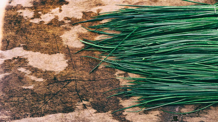 Chives for cooking